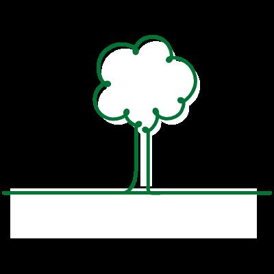 Plantio de mudas de árvores nativas