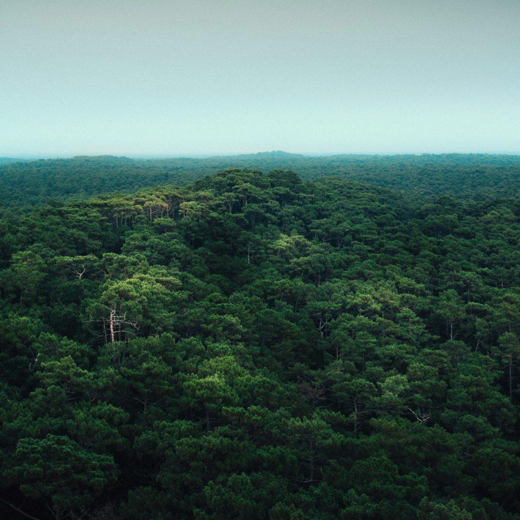 Vista ampla de uma floresta