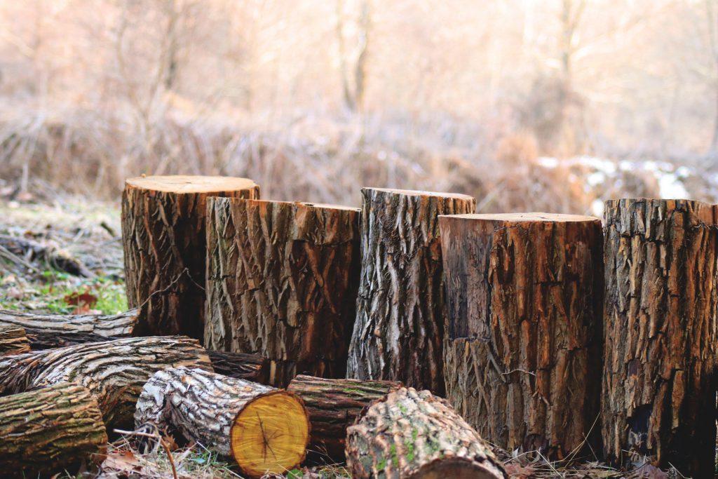 Tocos de árvores cortadas