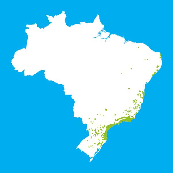 Mapa da área atual da Mata Atlântica no Brasil