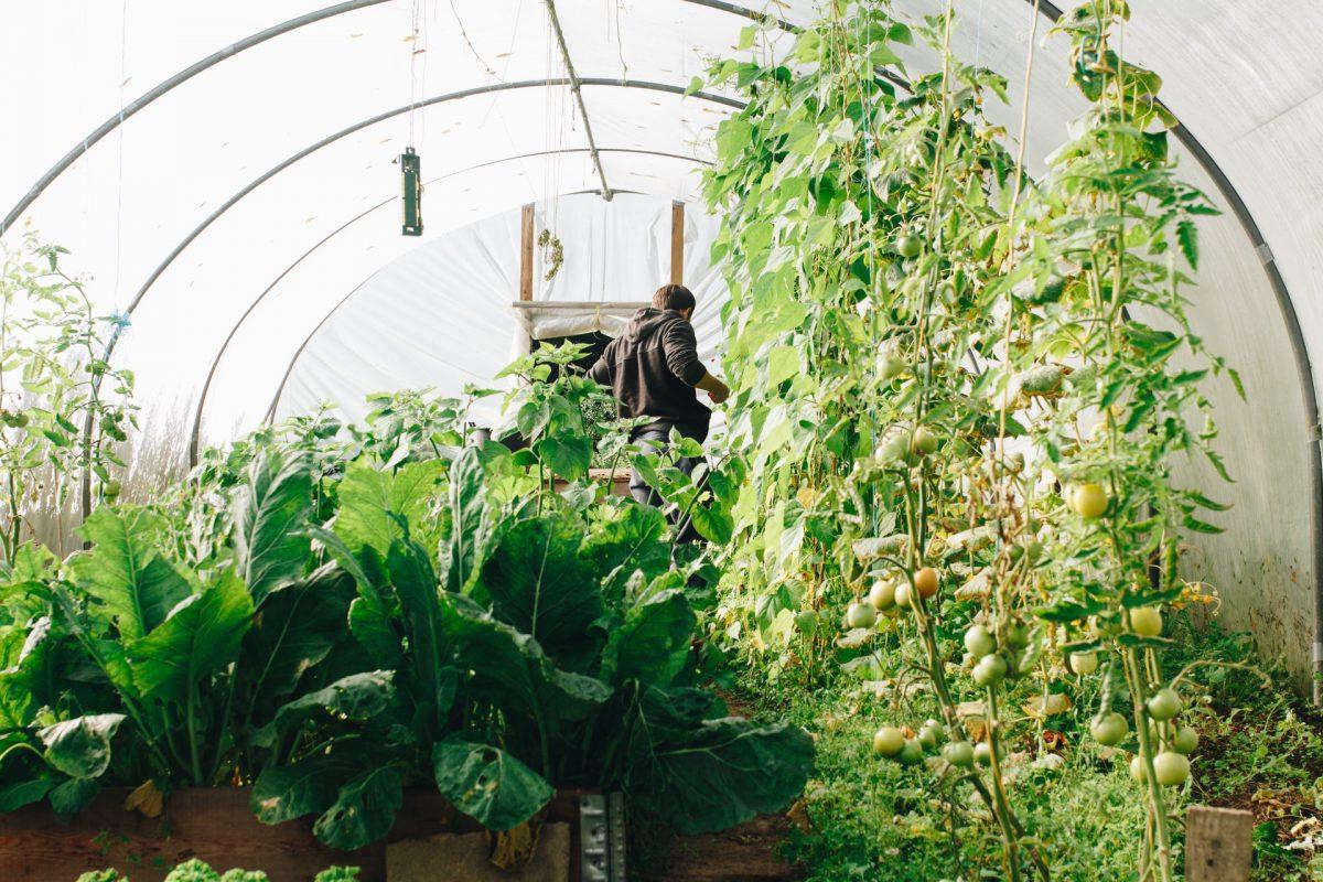 Estufa com várias espécies de plantas em primeiro plano