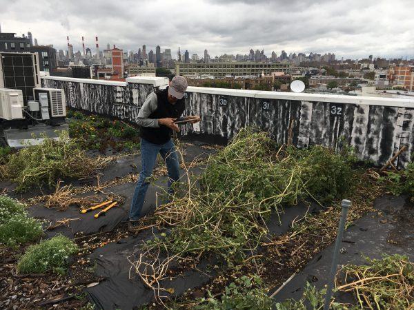 Homem trabalhando em horta plantada em terraço de edificação urbana com vista da cidade ao fundo