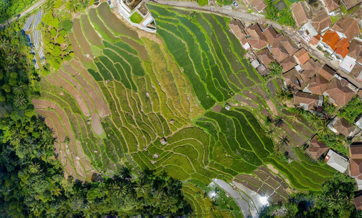 Vista aérea de áreas de plantação urbana, com casas ao redor
