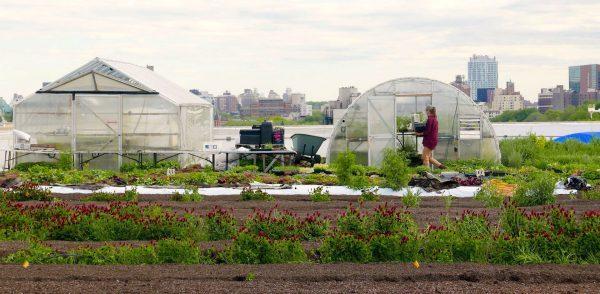 Horta com estufas e equipamentos de cultivo em telhado de grande cidade