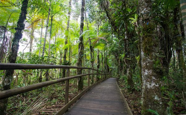 Parque Estadual Carlos Botelho
