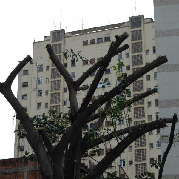 Árvore podada